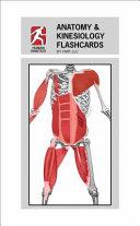 Anatomy   Kinesiology Flashcards Book