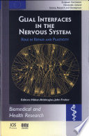 Glial Interfaces In The Nervous System