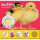 Duckling and Friends
