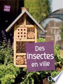 Des insectes en ville