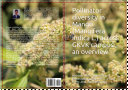 Pollinator diversity in Mango  Mangifera indica L   across GKVK campus  an overview