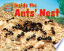 Inside the Ants  Nest