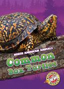 Common Box Turtles
