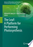 The Leaf  A Platform for Performing Photosynthesis