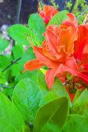 Pretty Orange Summer Flowers Journal