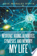 Neurons Axons Dendrites Synapses And Memory My Life
