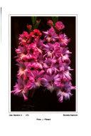 The Gladiolus Annual