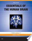Essentials Of The Human Brain E Book Book PDF