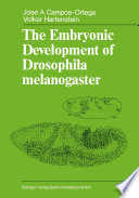 The Embryonic Development of Drosophila melanogaster