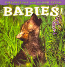 Yellowstone and Grand Teton Babies! ebook