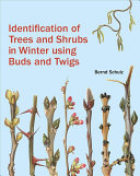 Identification of Trees and Shrubs in Winter Using Buds and Twigs