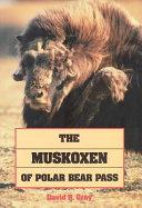 The Muskoxen of Polar Bear Pass