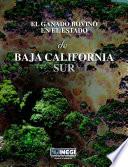 El ganado bovino en el estado de Baja California Sur