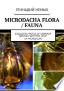 Microdacha flora / fauna. Exclusive photos of Gennady Nemykh with the help of microscope