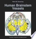 Human Brainstem Vessels