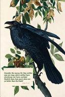 Consider the Ravens  Bible Verse Journal