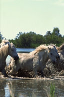 2020 Weekly Planner Horse Photo Equine Horses Crossing Water 134 Pages