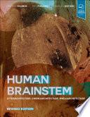 Human Brainstem
