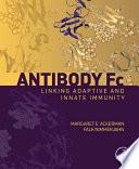 Antibody Fc