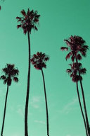 Mint Green Palm Trees Journal