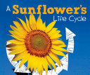 A Sunflower s Life Cycle