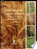 Bunt and Smut Diseases of Wheat