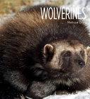 Living Wild: Wolverines