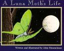 A Luna Moth's Life