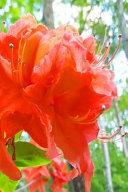 Beautiful Summer Flowers Journal
