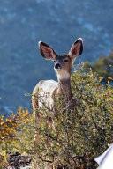 Kids Deer Journal