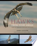 Hawks from Every Angle