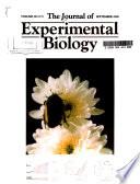 Journal of Experimental Biology  , Volume 203,Edição 17
