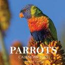 Parrots Calendar 2019
