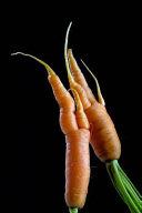 Orange Carrots Ugly Food Journal