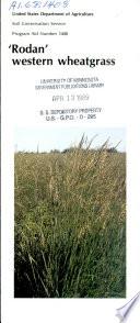 Rodan Western Wheatgrass